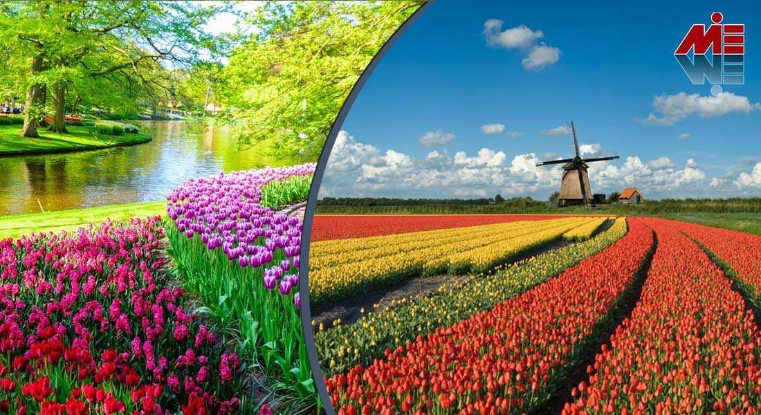 ثبت شرکت در هلند 3 ثبت شرکت در هلند